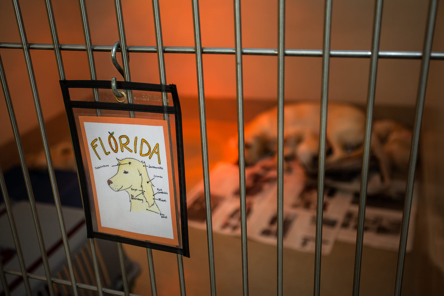 Guiding Eyes brood Florida's whelping kennel name tag.