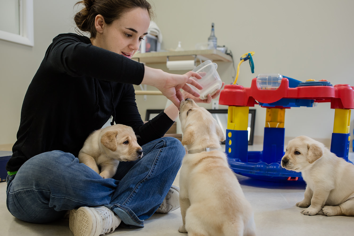 Guiding Eyes volunteer works on teach pups to sit.