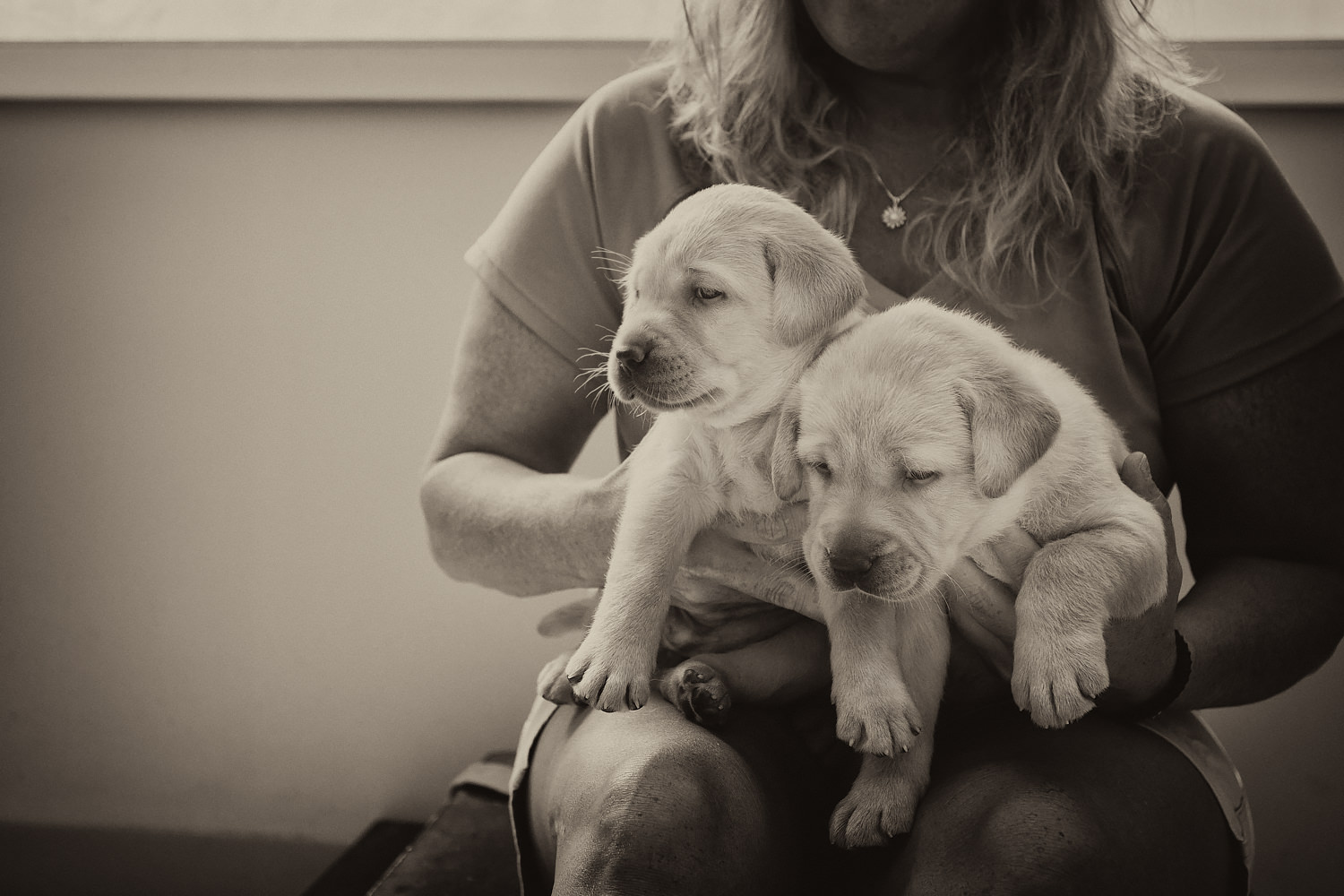 Two Guiding Eyes pups sit on the lap of a volunteer in the socialization room.