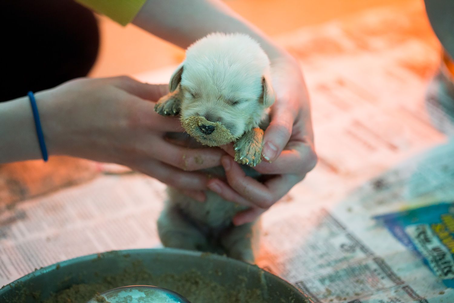 Guiding Eyes pup with a messy snout after their first solid meal.