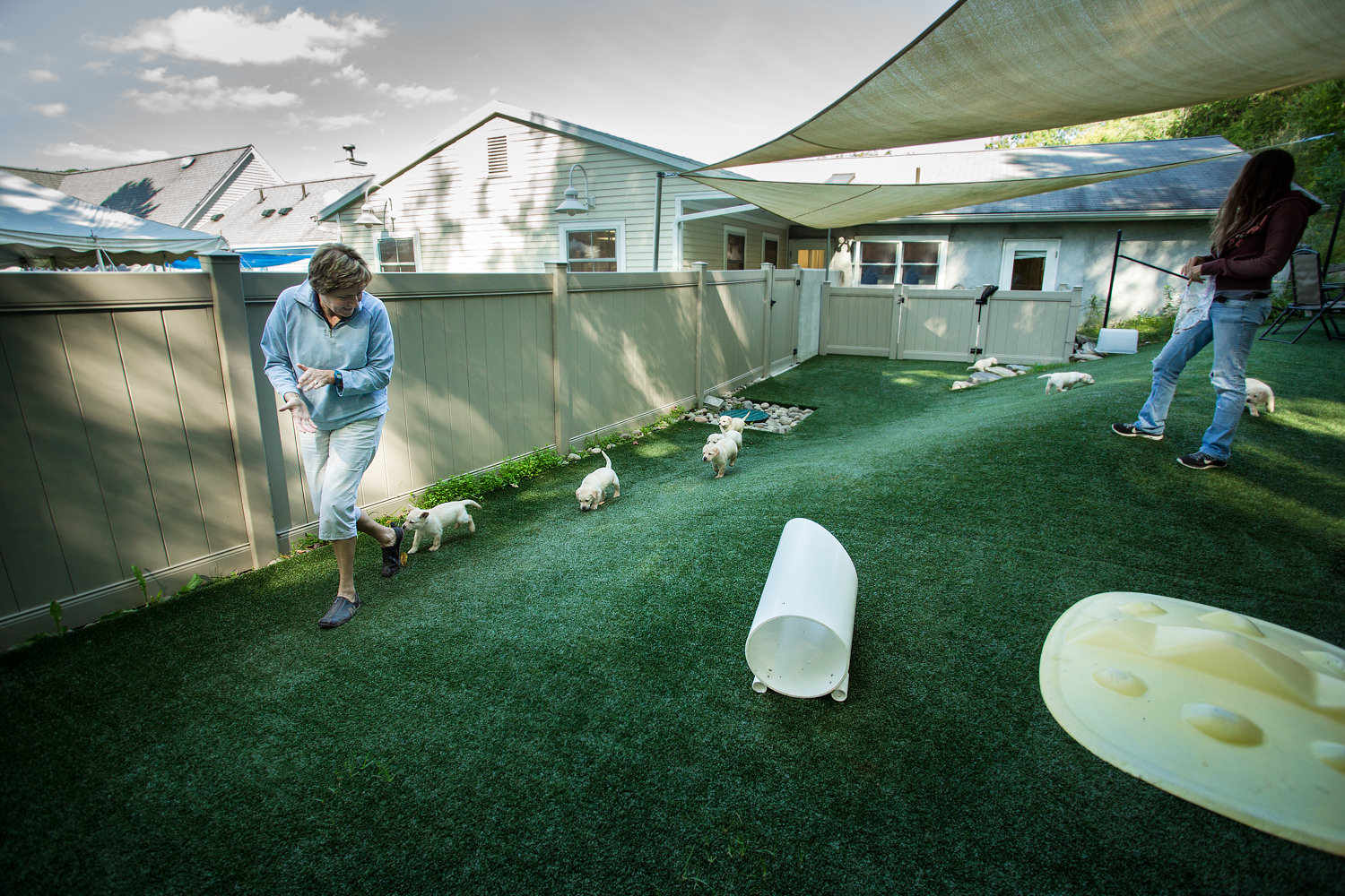 Guiding Eyes volunteer leads litter in outdoor turf area.